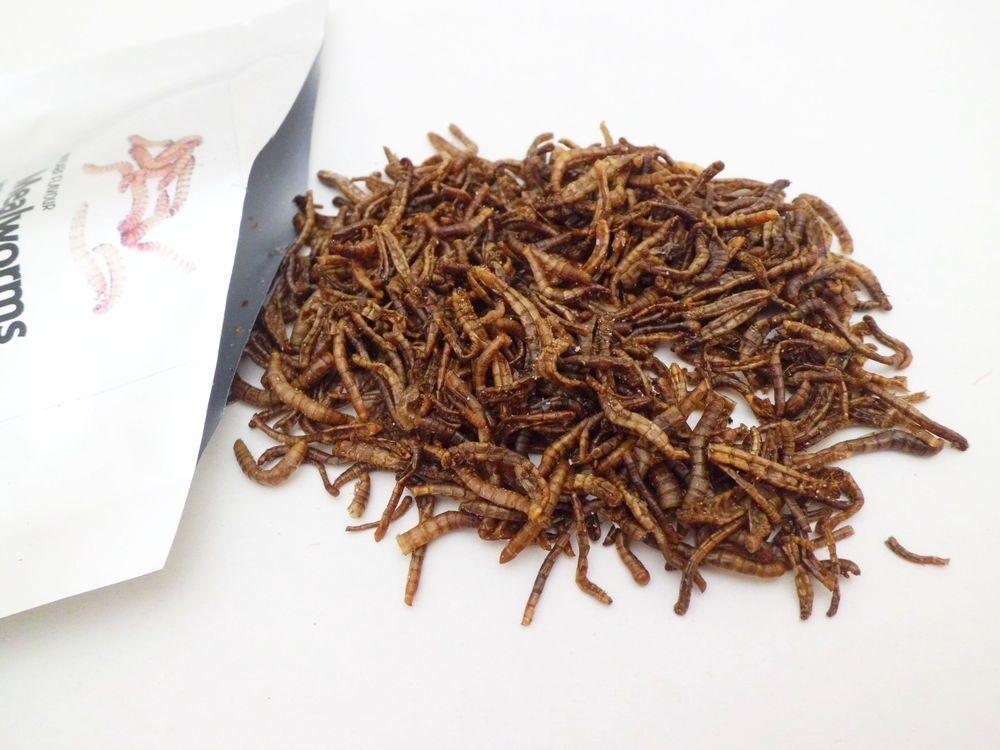 Insectos comestibles, ¡Al rico bicho!