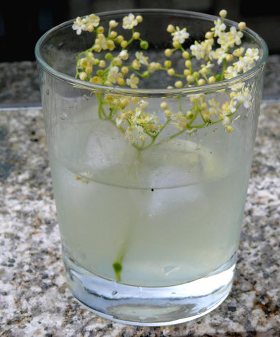 gintonic-con-flores-de-sauco