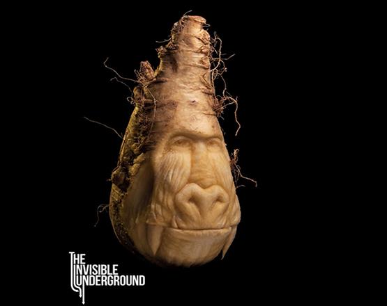 underground_baboon