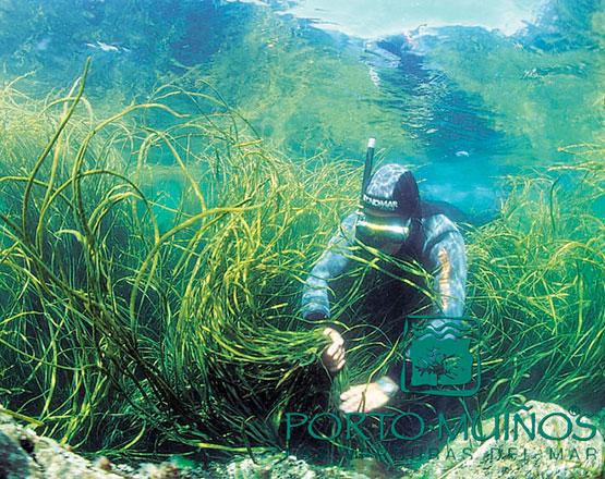 Recolectando algas