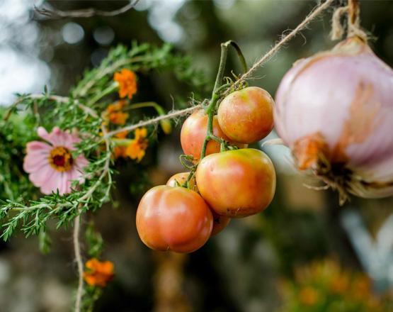 Dia de la cosecha