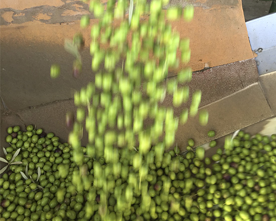 egregio el mejor aceite ecologico del mundo