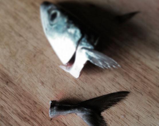 pescado de bajura