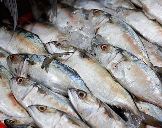 pescado en india