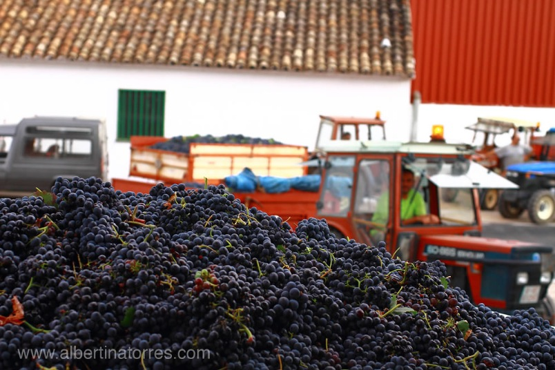 Spanish grapes uvas
