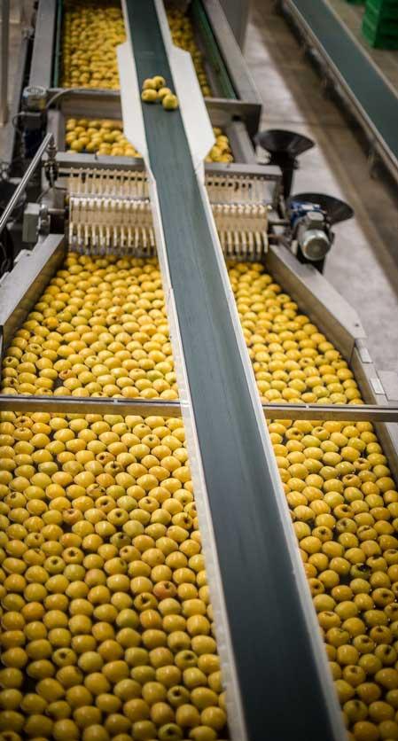 el-eden-manzanas-produccion
